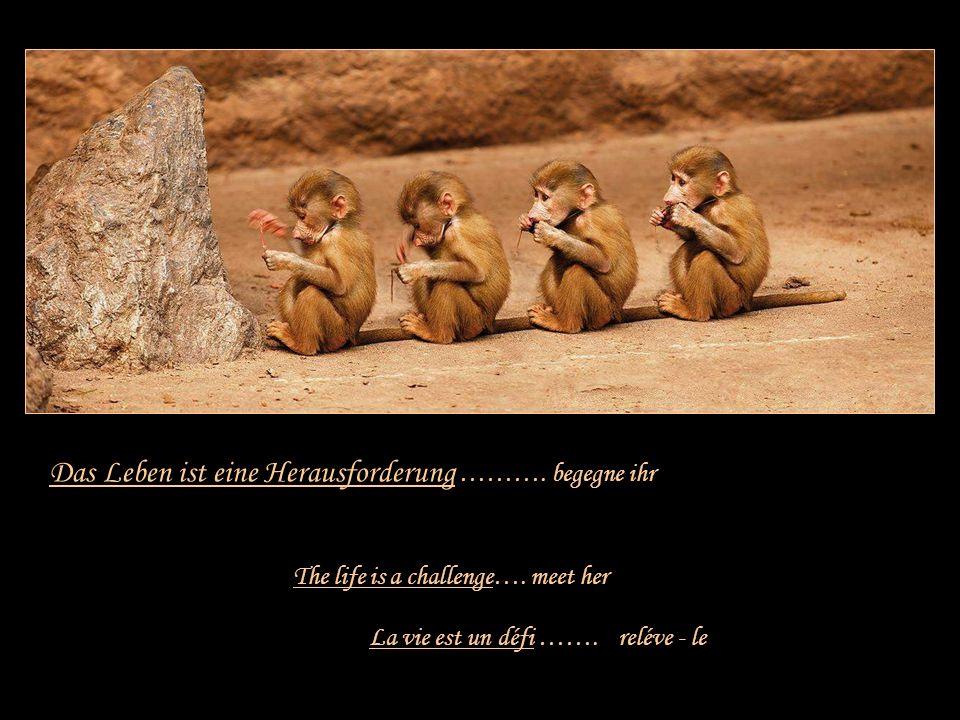 Leben ist …….. Life is …. La vie est … Danke an Hans, der mir diese Zeilen zusandte!! Musik: Bette Midler ~ From a distance