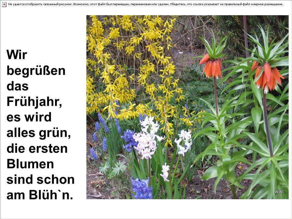 Wir begrüßen das Frühjahr, es wird alles grün, die ersten Blumen sind schon am Blüh`n.