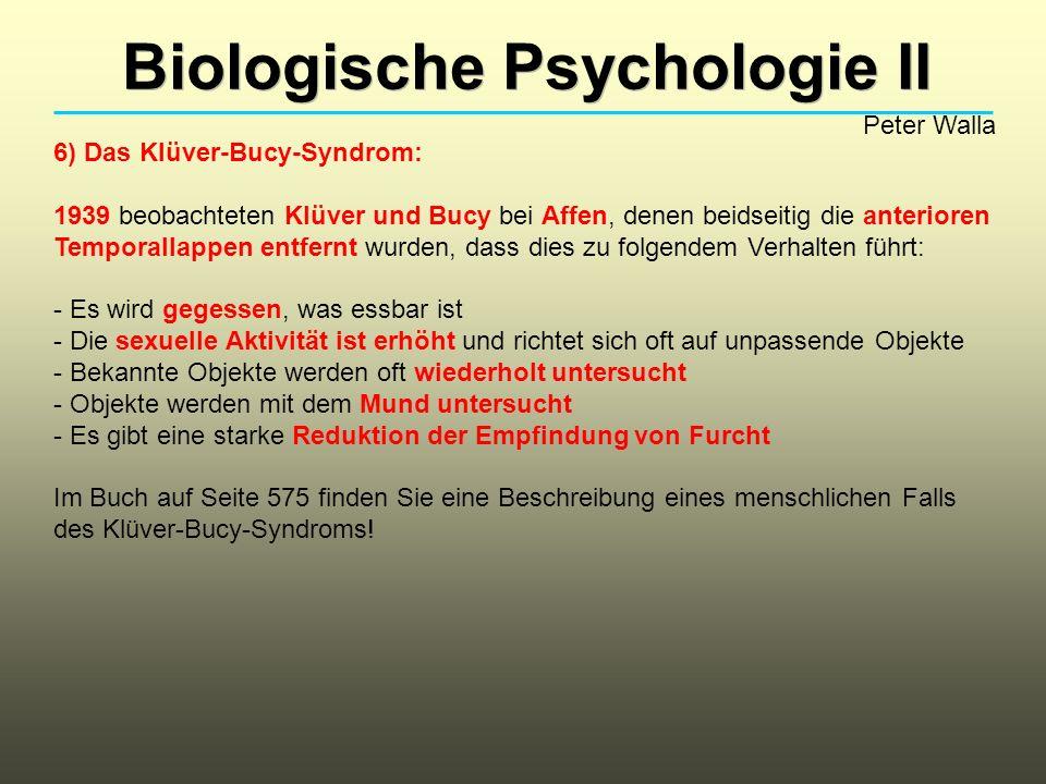 Biologische Psychologie II Peter Walla 6) Das Klüver-Bucy-Syndrom: 1939 beobachteten Klüver und Bucy bei Affen, denen beidseitig die anterioren Tempor