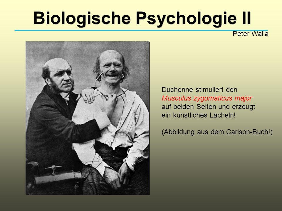 Biologische Psychologie II Peter Walla Duchenne stimuliert den Musculus zygomaticus major auf beiden Seiten und erzeugt ein künstliches Lächeln.
