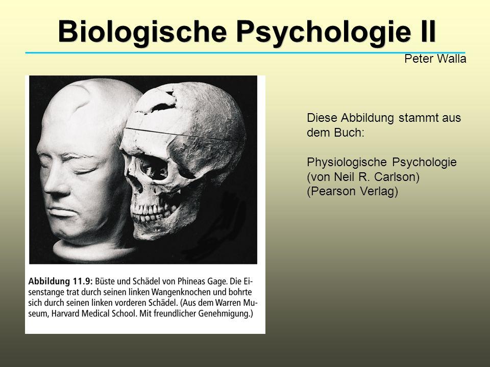 Biologische Psychologie II Peter Walla Diese Abbildung stammt aus dem Buch: Physiologische Psychologie (von Neil R. Carlson) (Pearson Verlag)