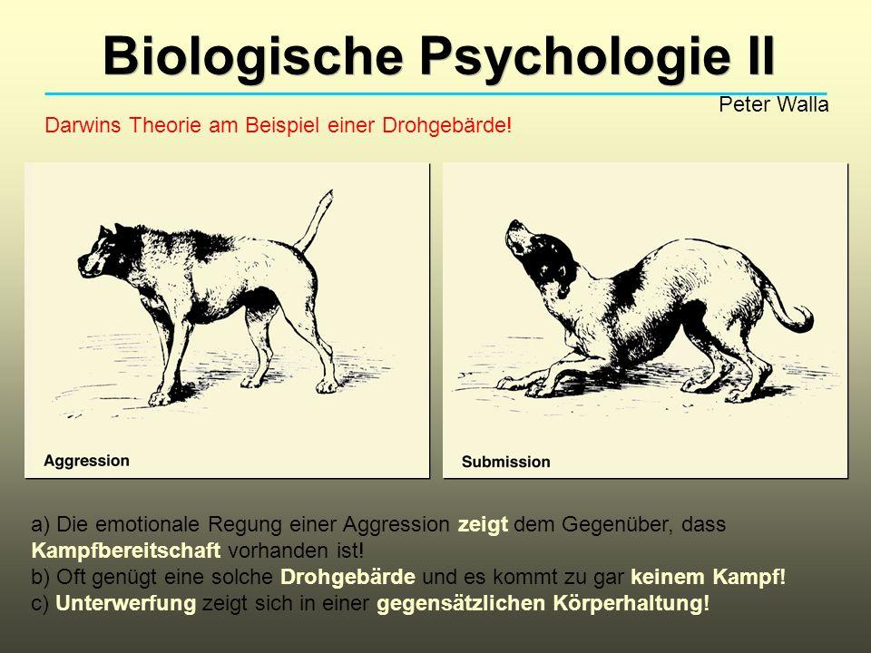 Biologische Psychologie II Peter Walla Darwins Theorie am Beispiel einer Drohgebärde! a) Die emotionale Regung einer Aggression zeigt dem Gegenüber, d