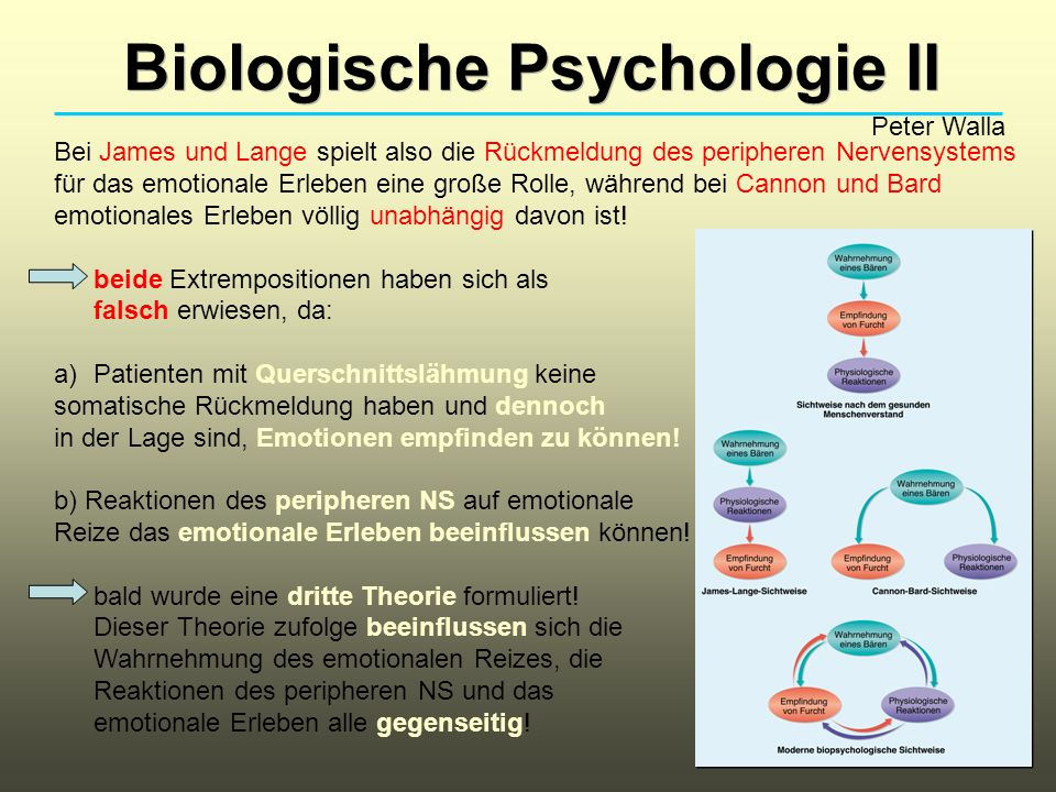 Biologische Psychologie II Peter Walla Bei James und Lange spielt also die Rückmeldung des peripheren Nervensystems für das emotionale Erleben eine große Rolle, während bei Cannon und Bard emotionales Erleben völlig unabhängig davon ist.