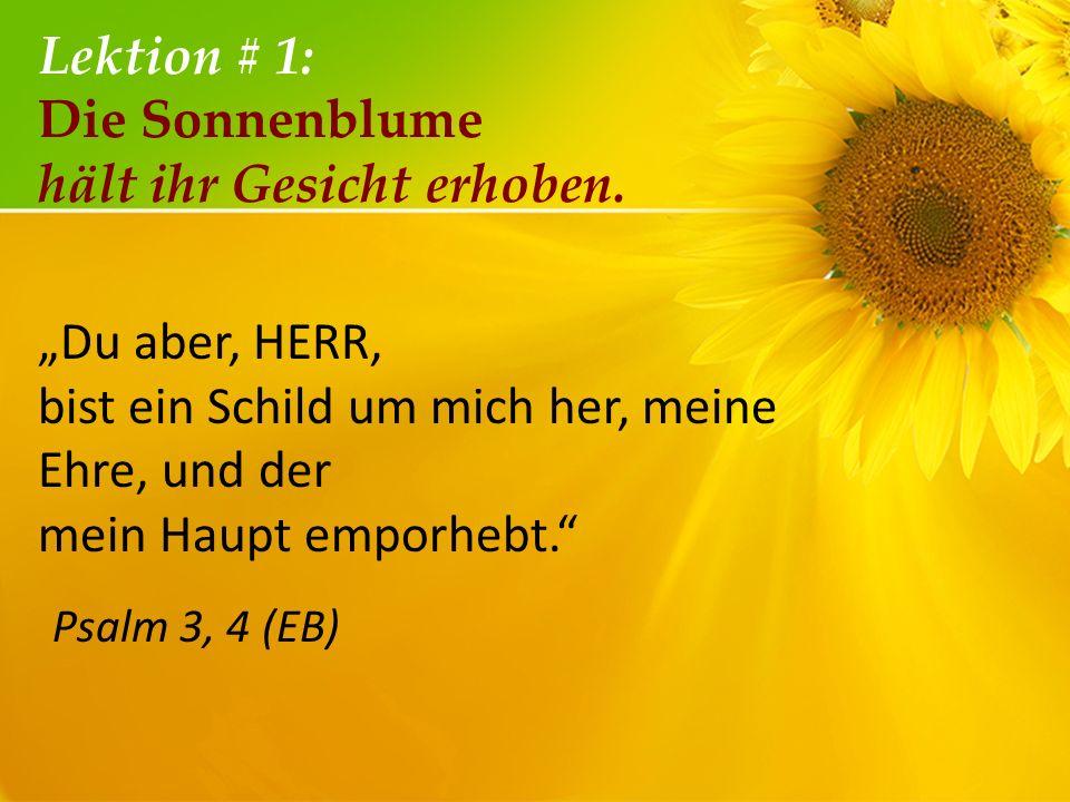 Lektion # 1: Die Sonnenblume hält ihr Gesicht erhoben. Du aber, HERR, bist ein Schild um mich her, meine Ehre, und der mein Haupt emporhebt. Psalm 3,