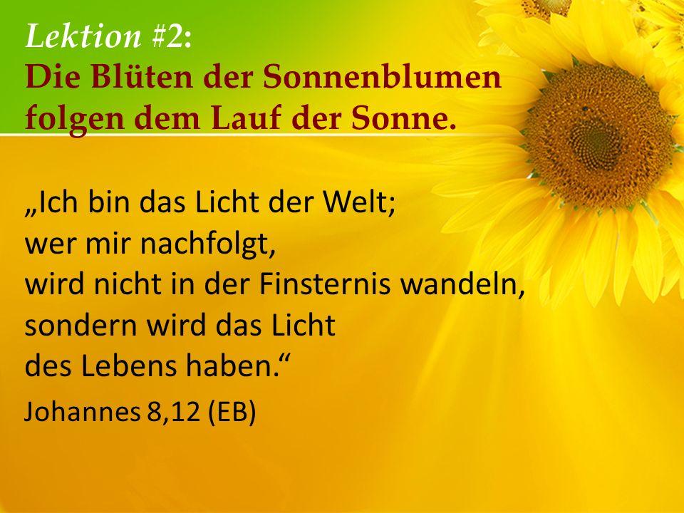 Lektion #2: Die Blüten der Sonnenblumen folgen dem Lauf der Sonne. Ich bin das Licht der Welt; wer mir nachfolgt, wird nicht in der Finsternis wandeln