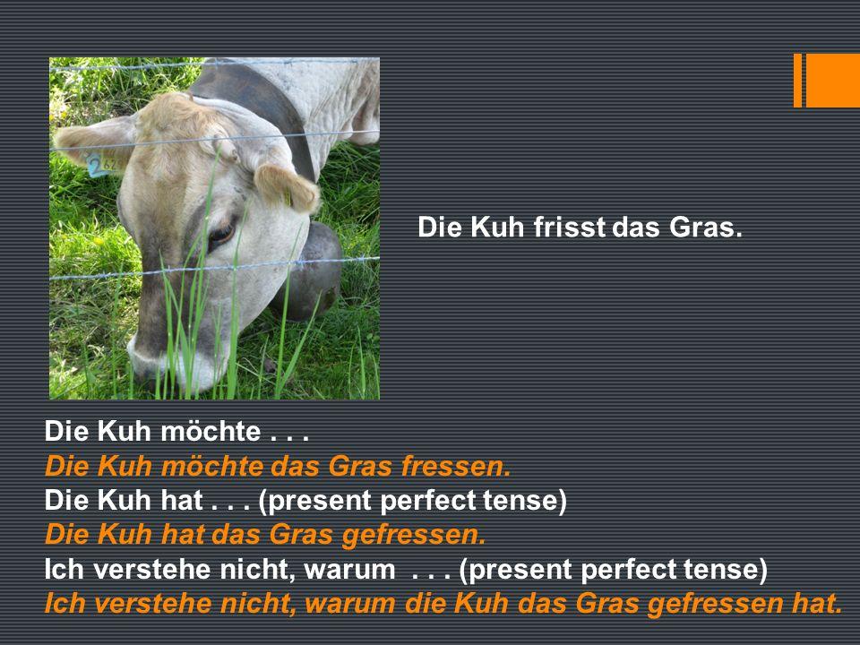 Die Kuh frisst das Gras. Die Kuh möchte... Die Kuh möchte das Gras fressen.