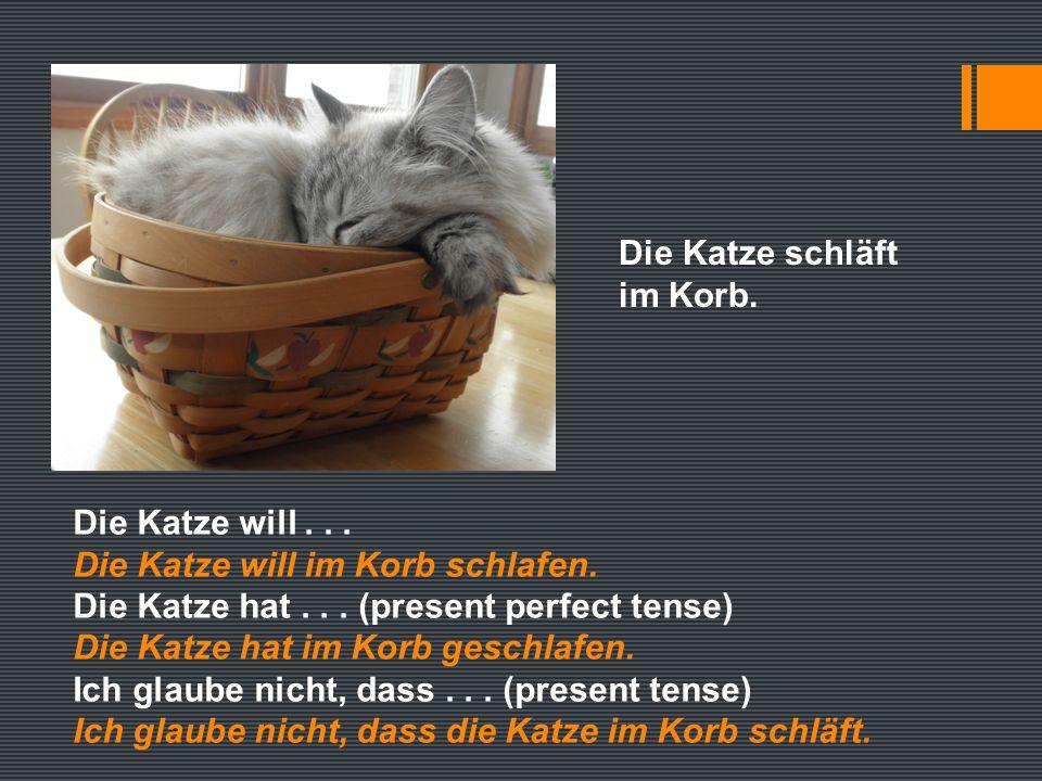 Die Katze schläft im Korb. Die Katze will... Die Katze will im Korb schlafen.