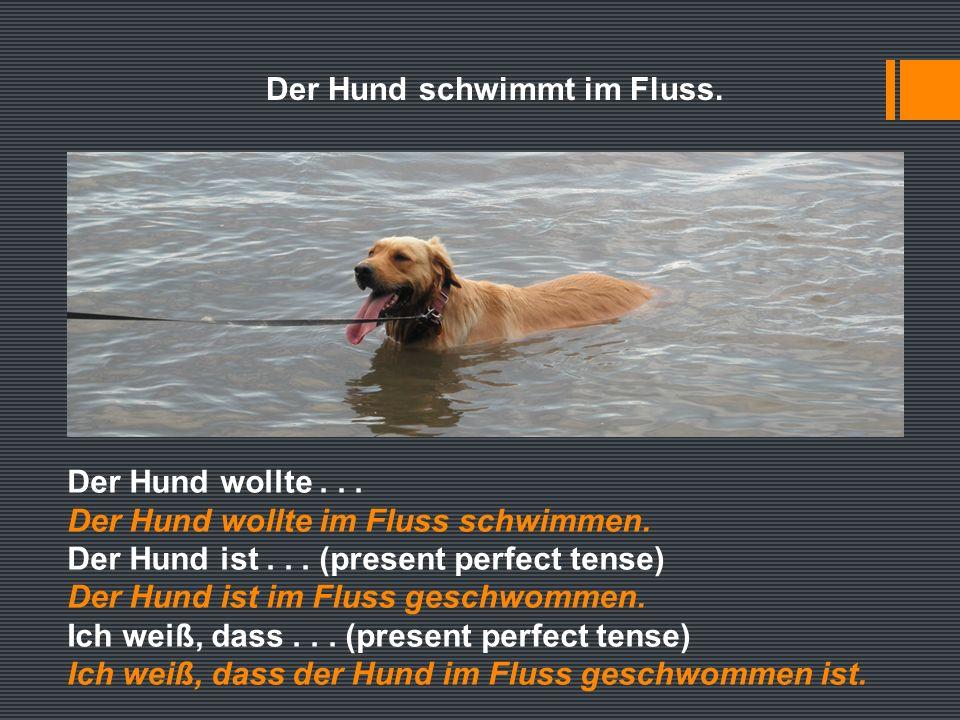 Der Hund schwimmt im Fluss. Der Hund wollte... Der Hund wollte im Fluss schwimmen.