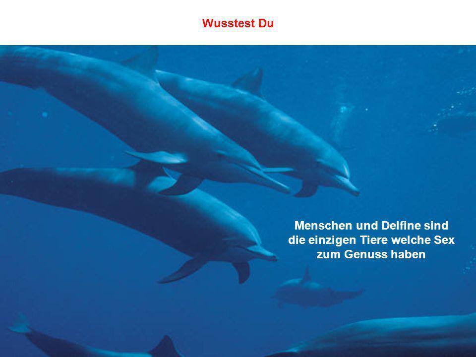 Menschen und Delfine sind die einzigen Tiere welche Sex zum Genuss haben Wusstest Du
