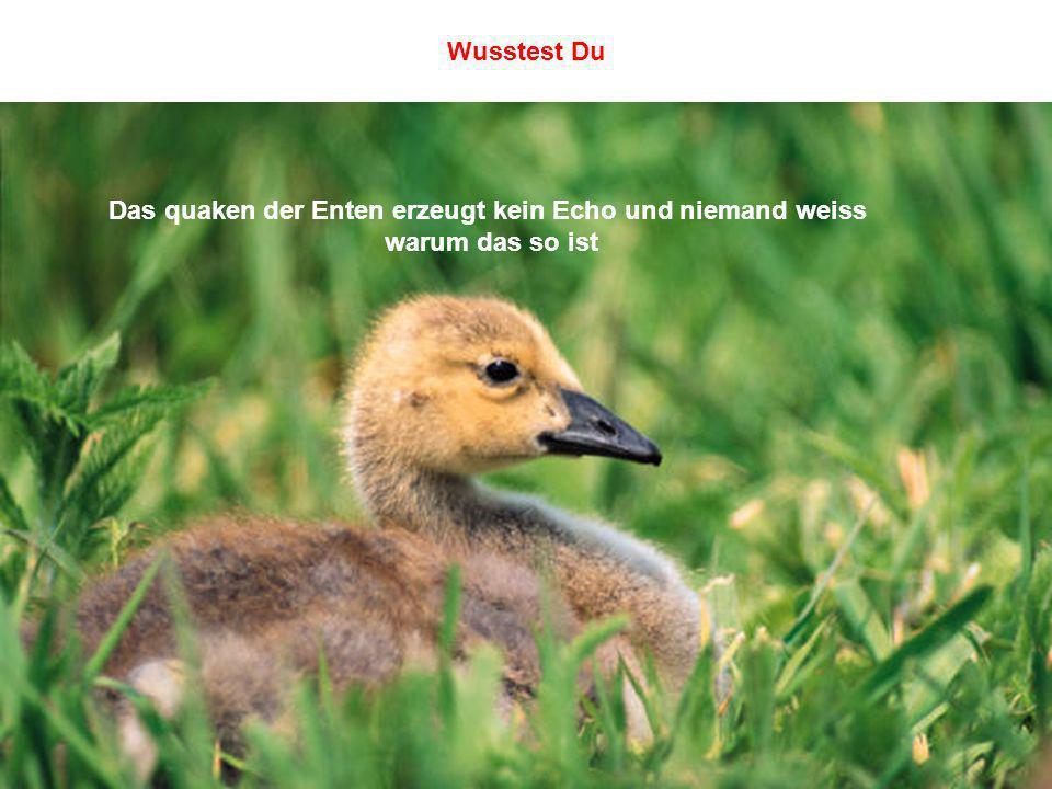 Das quaken der Enten erzeugt kein Echo und niemand weiss warum das so ist Wusstest Du