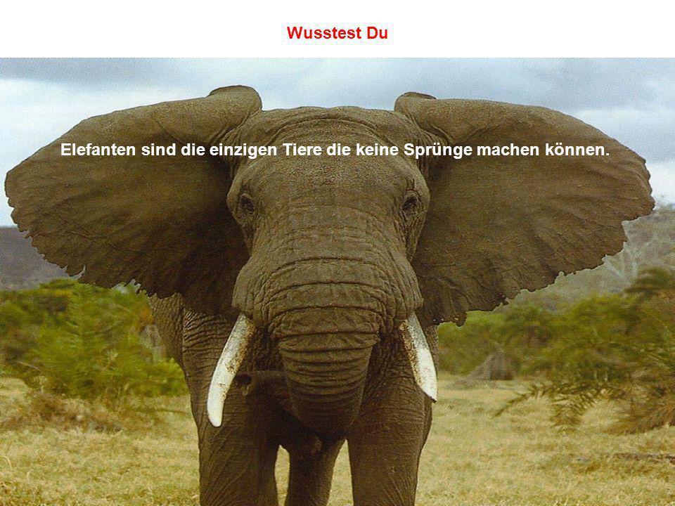 Elefanten sind die einzigen Tiere die keine Sprünge machen können. Wusstest Du