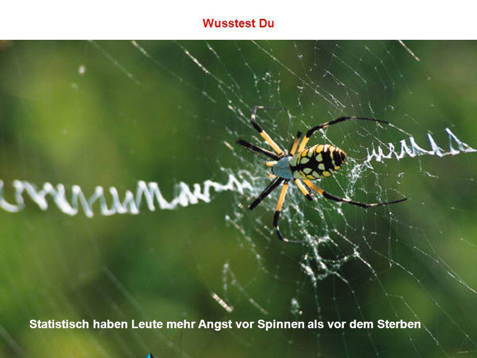 Statistisch haben Leute mehr Angst vor Spinnen als vor dem Sterben Wusstest Du