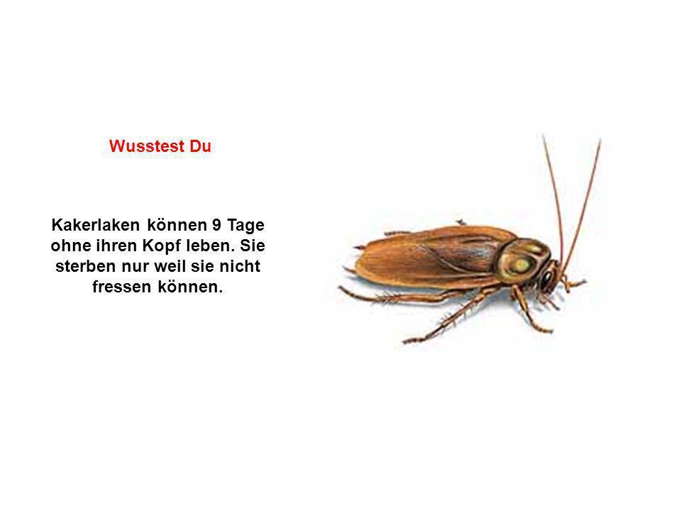 Kakerlaken können 9 Tage ohne ihren Kopf leben. Sie sterben nur weil sie nicht fressen können. Wusstest Du