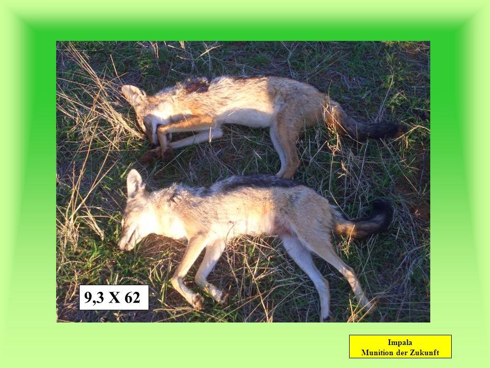 Impala Munition der Zukunft wildbret- und balgschonend.30-06.270 Win