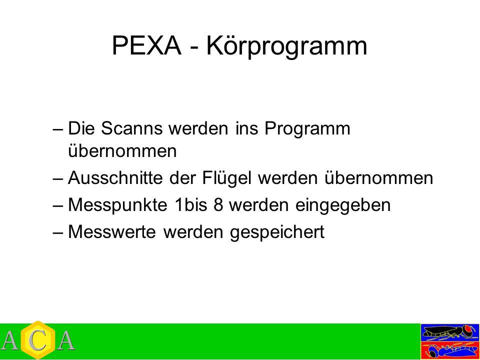 PEXA - Körprogramm –Die Scanns werden ins Programm übernommen –Ausschnitte der Flügel werden übernommen –Messpunkte 1bis 8 werden eingegeben –Messwert