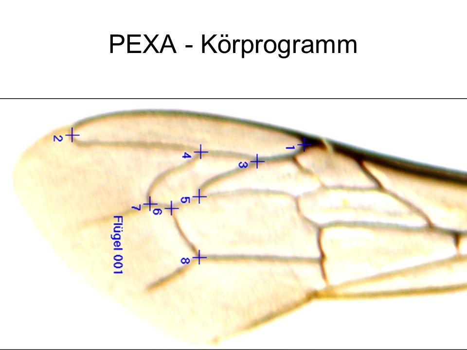 PEXA - Körprogramm