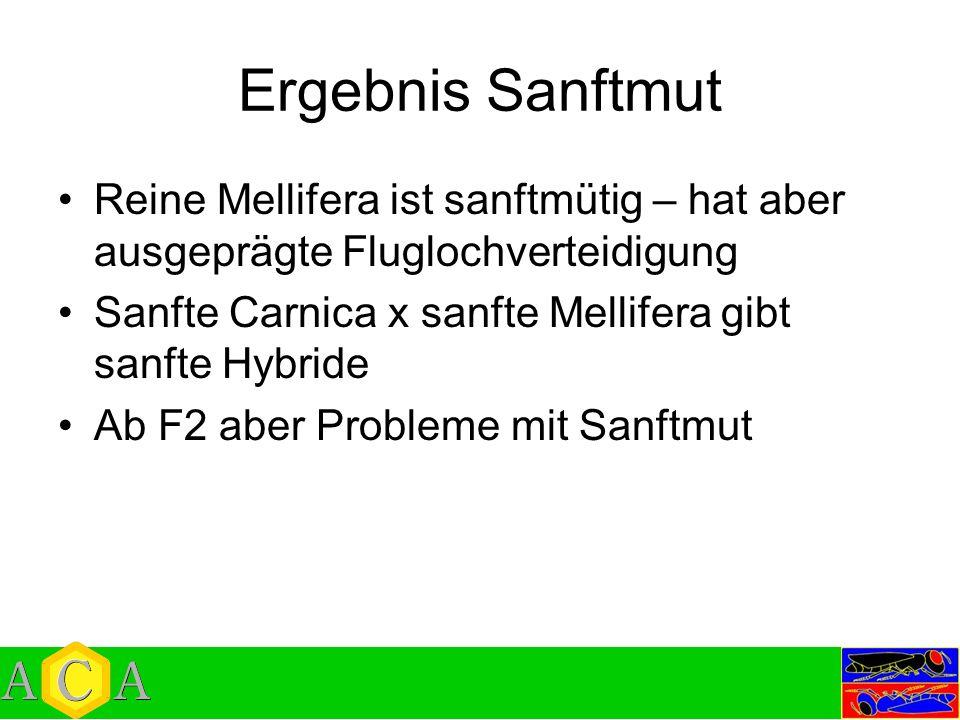 Ergebnis Sanftmut Reine Mellifera ist sanftmütig – hat aber ausgeprägte Fluglochverteidigung Sanfte Carnica x sanfte Mellifera gibt sanfte Hybride Ab