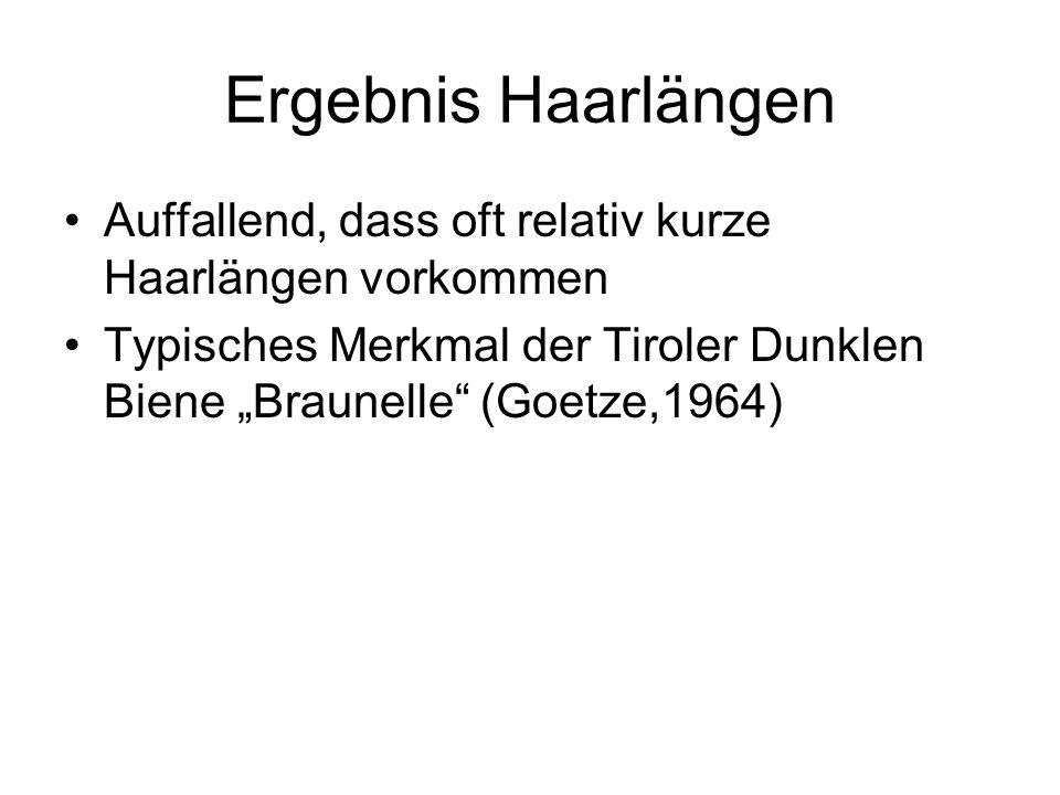 Auffallend, dass oft relativ kurze Haarlängen vorkommen Typisches Merkmal der Tiroler Dunklen Biene Braunelle (Goetze,1964)