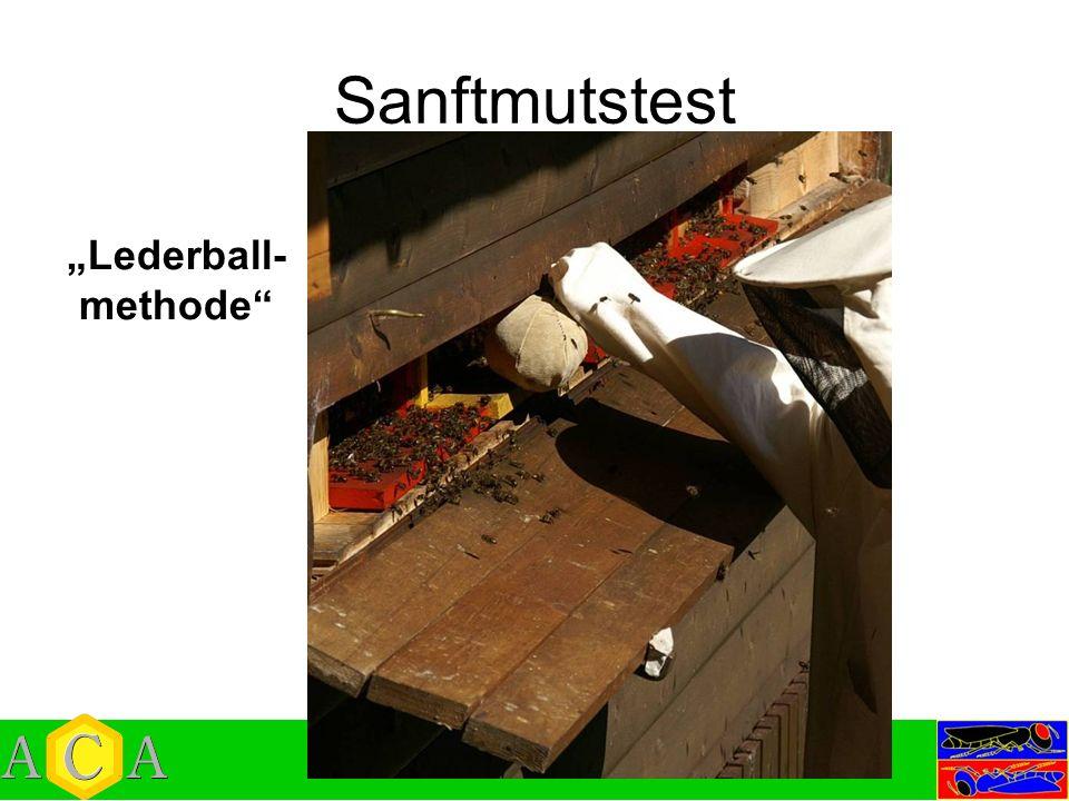 Sanftmutstest Lederball- methode