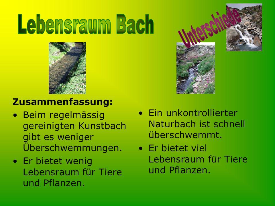 Zusammenfassung: Beim regelmässig gereinigten Kunstbach gibt es weniger Überschwemmungen. Er bietet wenig Lebensraum für Tiere und Pflanzen. Ein unkon