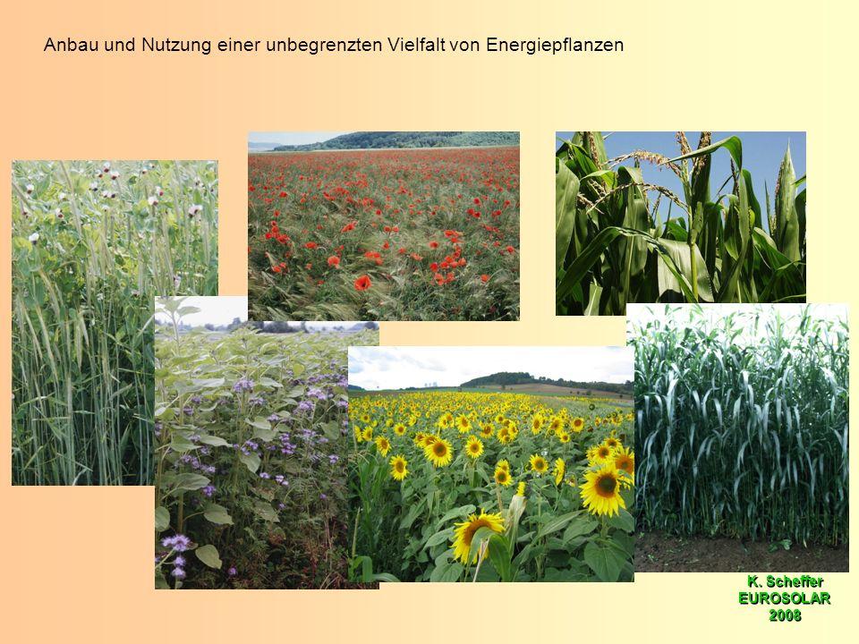 K. Scheffer EUROSOLAR 2008 K. Scheffer EUROSOLAR 2008 Anbau und Nutzung einer unbegrenzten Vielfalt von Energiepflanzen
