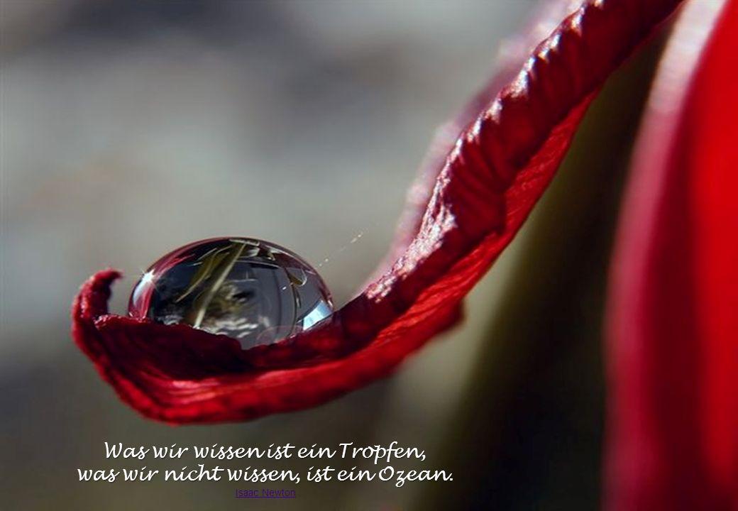 Klare Wassertropfen spiegeln die bezaubernde Umgebung wie Freudentränen die gutgesinnte Stimmungslage.