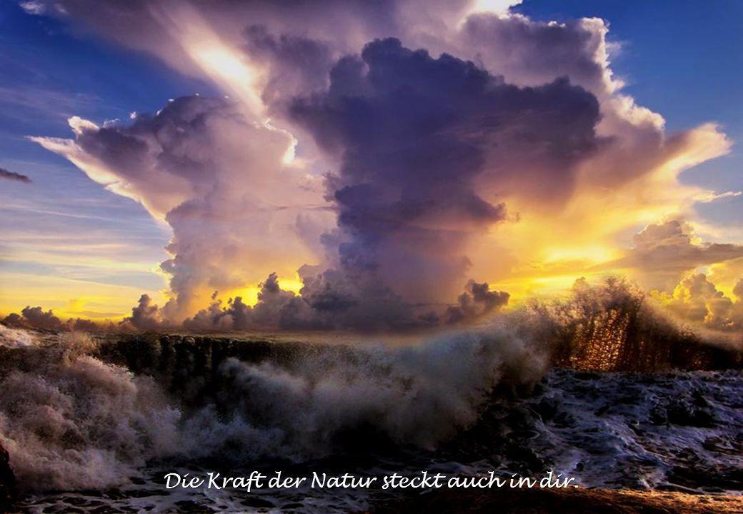 Die Kraft der Natur steckt auch in dir.