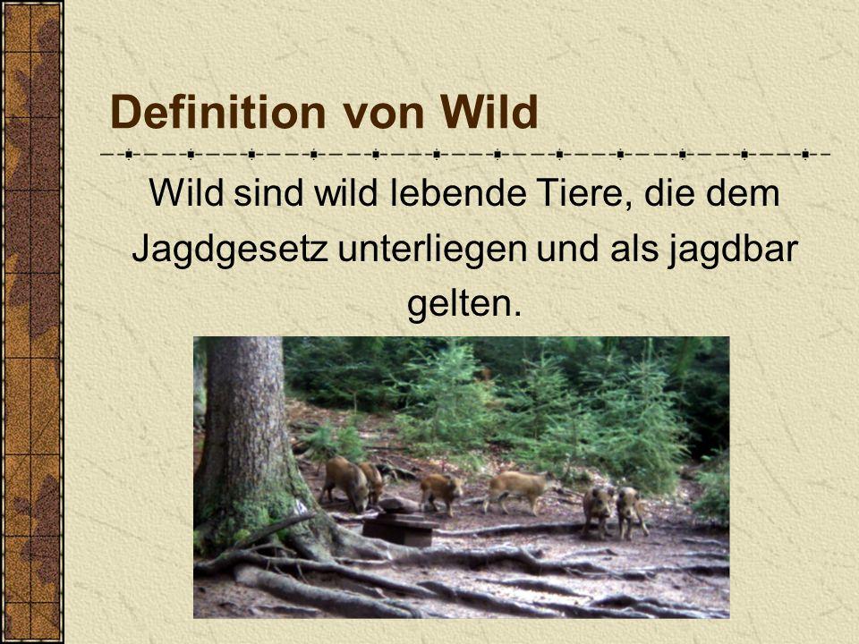 Wald kontra Wild Biologie 03.07.2009 Andreas Dragoun und Benedikt Streun