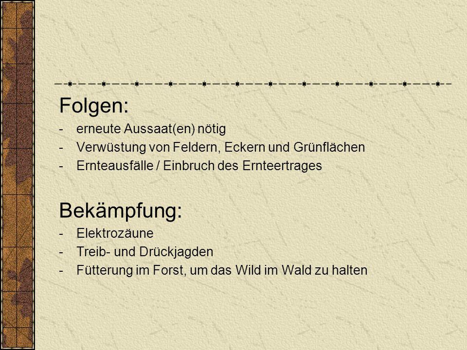 Folgen: -erneute Aussaat(en) nötig -Verwüstung von Feldern, Eckern und Grünflächen -Ernteausfälle / Einbruch des Ernteertrages Bekämpfung: -Elektrozäune -Treib- und Drückjagden -Fütterung im Forst, um das Wild im Wald zu halten