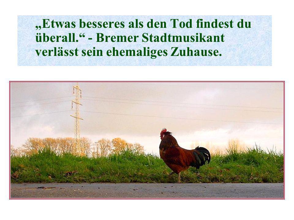 Etwas besseres als den Tod findest du überall. - Bremer Stadtmusikant verlässt sein ehemaliges Zuhause.