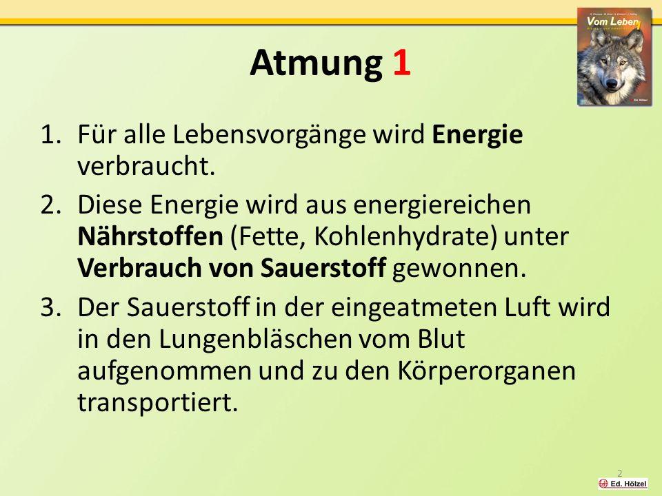 Atmung 1 1.Für alle Lebensvorgänge wird Energie verbraucht.