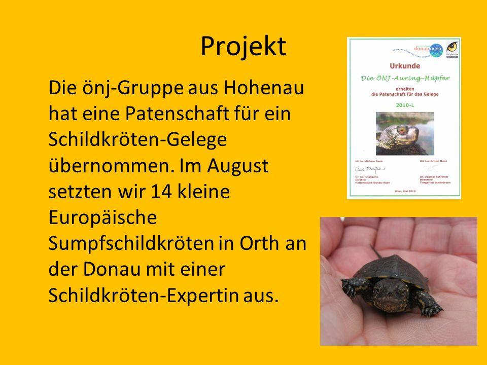 Projekt Die önj-Gruppe aus Hohenau hat eine Patenschaft für ein Schildkröten-Gelege übernommen. Im August setzten wir 14 kleine Europäische Sumpfschil