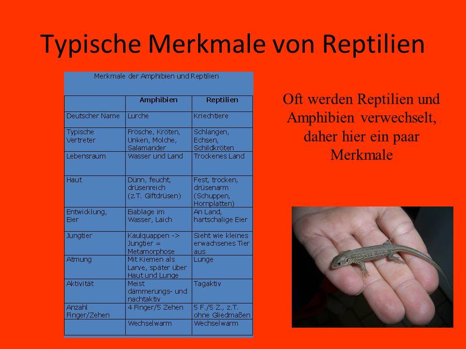Typische Merkmale von Reptilien Oft werden Reptilien und Amphibien verwechselt, daher hier ein paar Merkmale