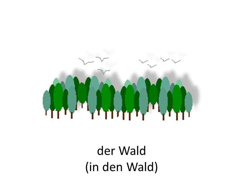 der Wald (in den Wald)