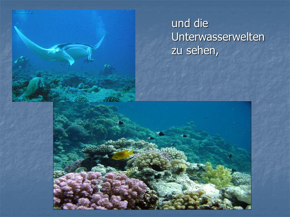 und die Unterwasserwelten zu sehen,
