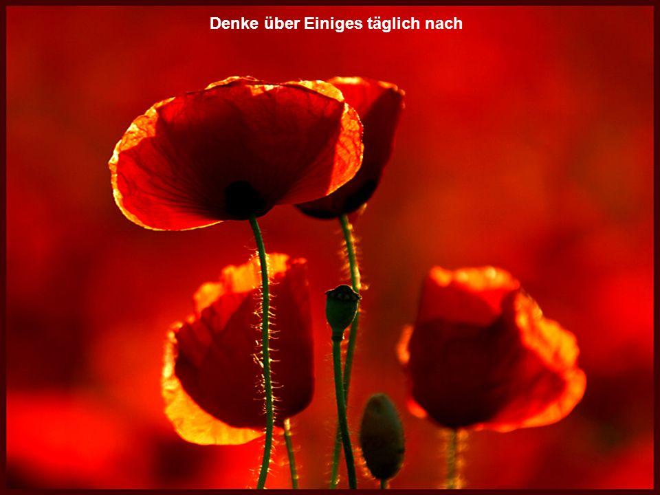 Musik: Nachtigall Serenade Ein Blumenstrauß für die Strömfreunde