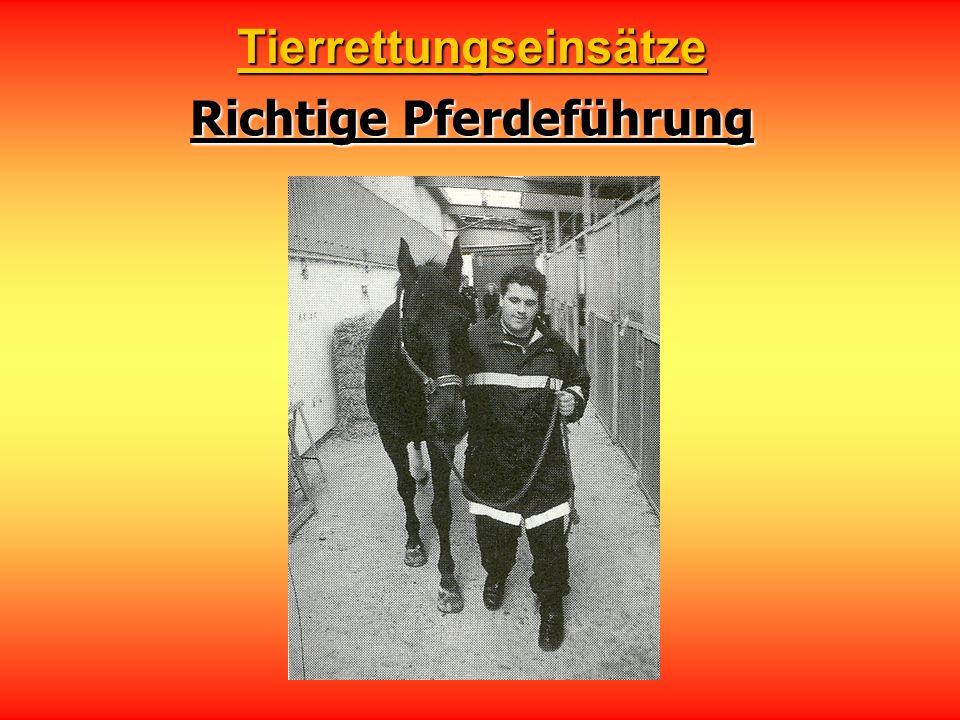 Richtige Pferdeführung Tierrettungseinsätze