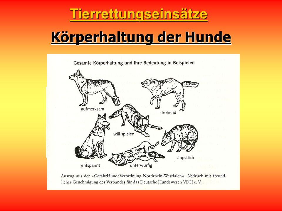 Körperhaltung der Hunde Tierrettungseinsätze