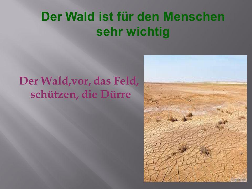 Der Wald,vor, das Feld, schützen, die Dürre Der Wald ist für den Menschen sehr wichtig