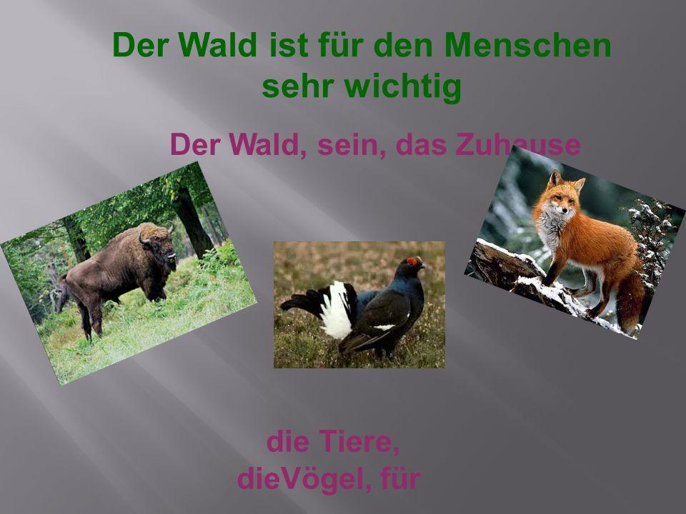 Der Wald, sein, das Zuhause die Tiere, dieVögel, für Der Wald ist für den Menschen sehr wichtig