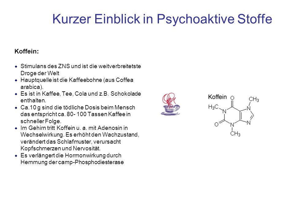 Kurzer Einblick in Psychoaktive Stoffe Koffein: Stimulans des ZNS und ist die weitverbreitetste Droge der Welt Hauptquelle ist die Kaffeebohne (aus Co