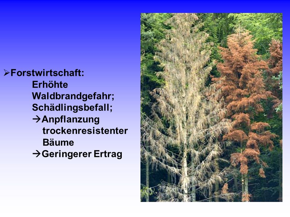 Forstwirtschaft: Erhöhte Waldbrandgefahr; Schädlingsbefall; Anpflanzung trockenresistenter Bäume Geringerer Ertrag