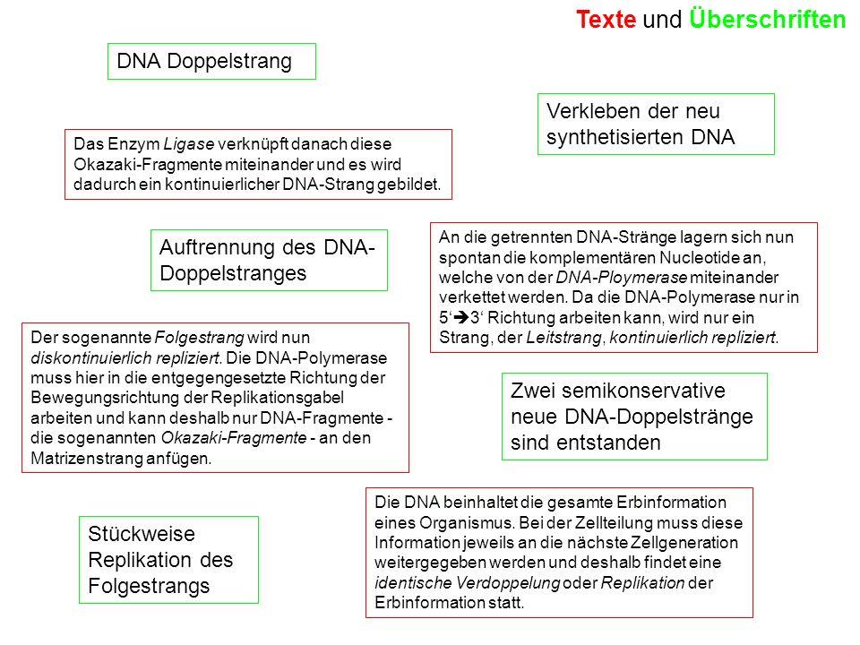 Die DNA beinhaltet die gesamte Erbinformation eines Organismus. Bei der Zellteilung muss diese Information jeweils an die nächste Zellgeneration weite