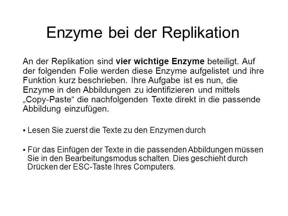 Enzyme bei der Replikation An der Replikation sind vier wichtige Enzyme beteiligt. Auf der folgenden Folie werden diese Enzyme aufgelistet und ihre Fu