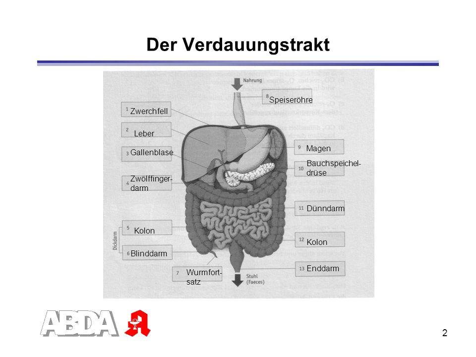 2 Der Verdauungstrakt Leber Zwerchfell Gallenblase Zwölffinger- darm Kolon Blinddarm Wurmfort- satz Speiseröhre Magen Bauchspeichel- drüse Dünndarm Ko