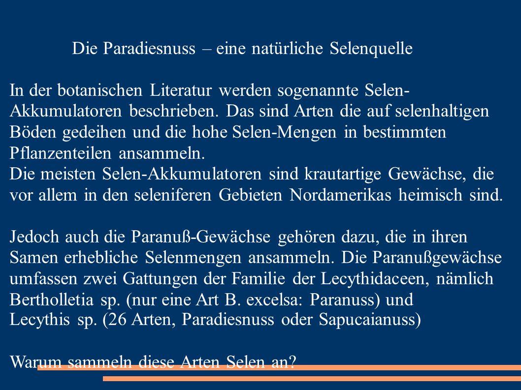 Die Paradiesnuss – eine natürliche Selenquelle In der botanischen Literatur werden sogenannte Selen- Akkumulatoren beschrieben. Das sind Arten die auf