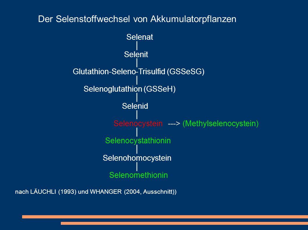 Der Selenstoffwechsel von Akkumulatorpflanzen Selenat Selenit Glutathion-Seleno-Trisulfid (GSSeSG) Selenoglutathion (GSSeH) Selenid Selenocystein --->