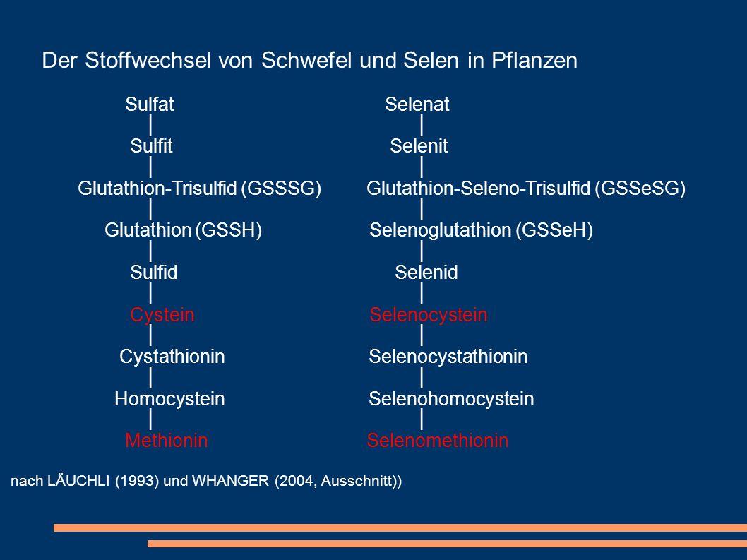 Der Stoffwechsel von Schwefel und Selen in Pflanzen Sulfat Selenat Sulfit Selenit Glutathion-Trisulfid (GSSSG) Glutathion-Seleno-Trisulfid (GSSeSG) Gl