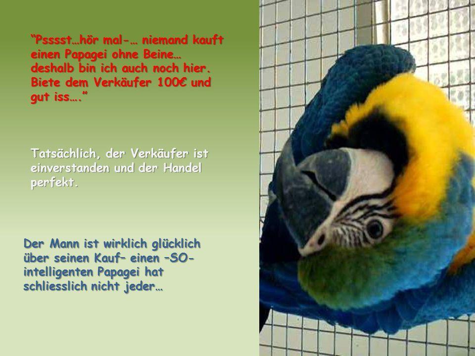 Psssst…hör mal-… niemand kauft einen Papagei ohne Beine… deshalb bin ich auch noch hier. Biete dem Verkäufer 100 und gut iss…. Tatsächlich, der Verkäu