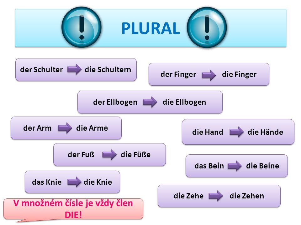 Was ist richtig? Wie sagt man ucho auf Deutsch? a) das Auge b) das Ohr c) die Augenbraue